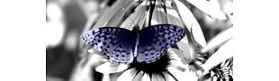 Blue Butterfly Vintage